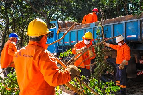 Árvores: das podas às compostagens