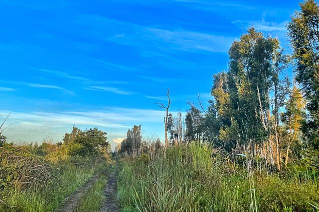 Bar Ditch Trail 05-20200829