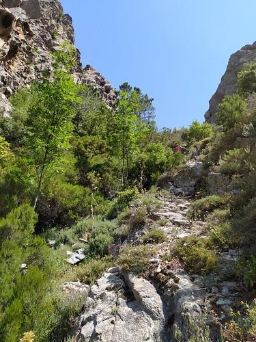 Sortie de la végétation dans le ravin affluent du Vaglie