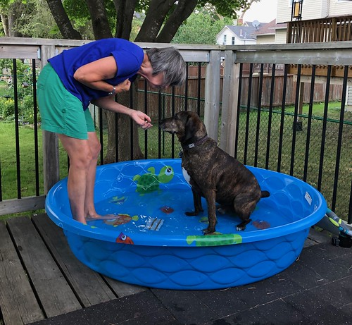 Carleton Place - Hector and the pool