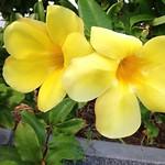 Окинава 2013 Okinawa Окинава 2013 Okinawa