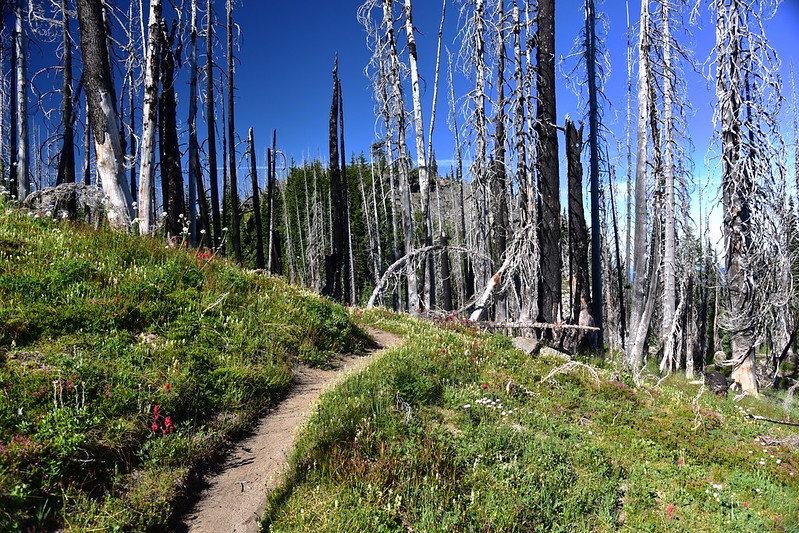 Hiking the PCT