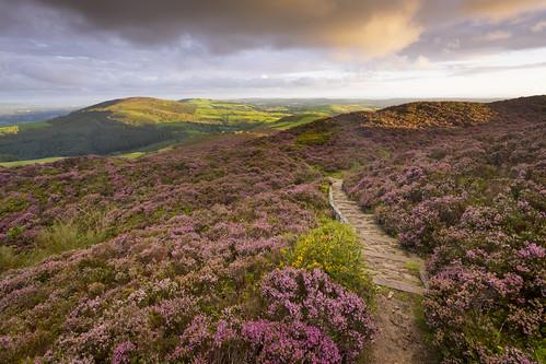 clwyd moelarthur hillfort hill heather wales cymru landscape sunrise summer clouds nikond7200 sigma1020 path offasdyke