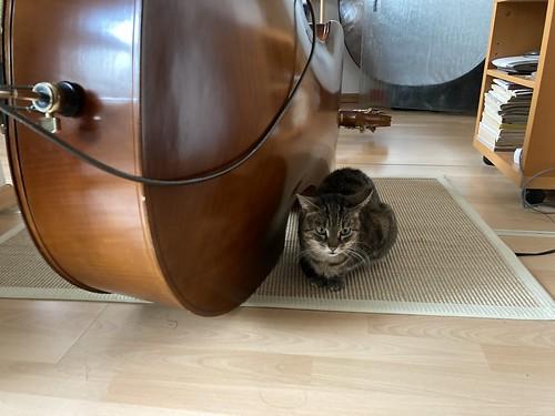 7e4_IMG_0063-upright-cat