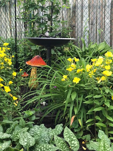 Carleton Place - Linda's garden
