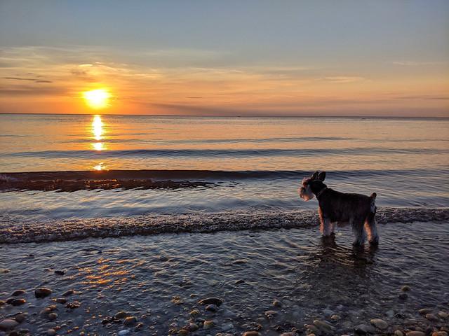 Pasha @ sunset on Bailie Beach