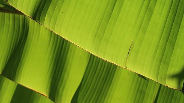Vert-banane