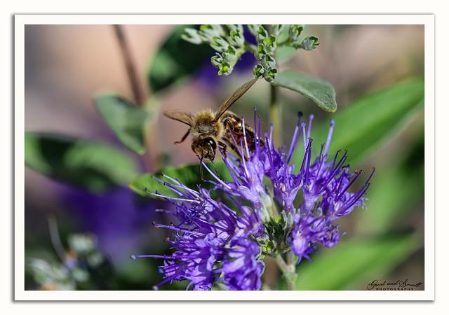 Bee Thankful