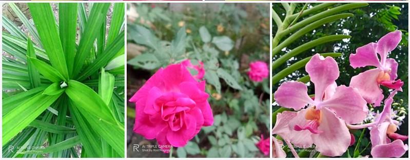 realme c12 rodmagaru.com blog review