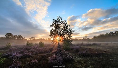 outdoors tree nature scenics sky tranquility landscape scenery tranquil scene sunlight plant sunrise dawn beauty fog sunbeam kesselse heide belgium