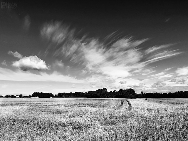 Windmill_Pasture