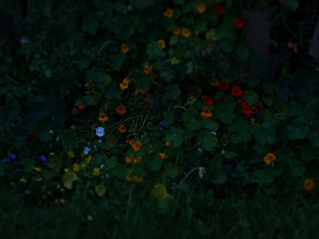 2018_08_14 P1010496 twilight