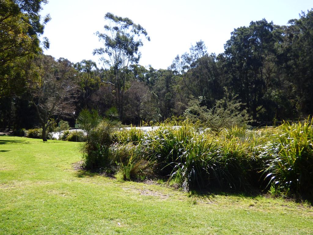 H.V.Evatt Park, Lugarno, NSW