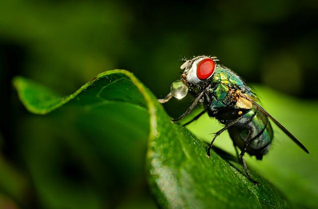 Even Flies Have Fun