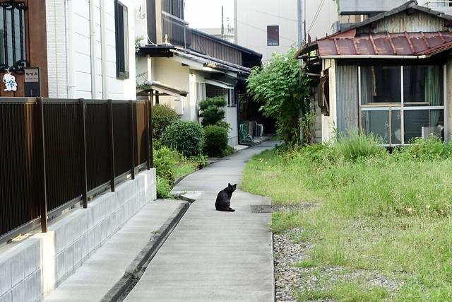 Today's Cat@2020ー08ー30