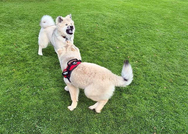 Jippy och Dante