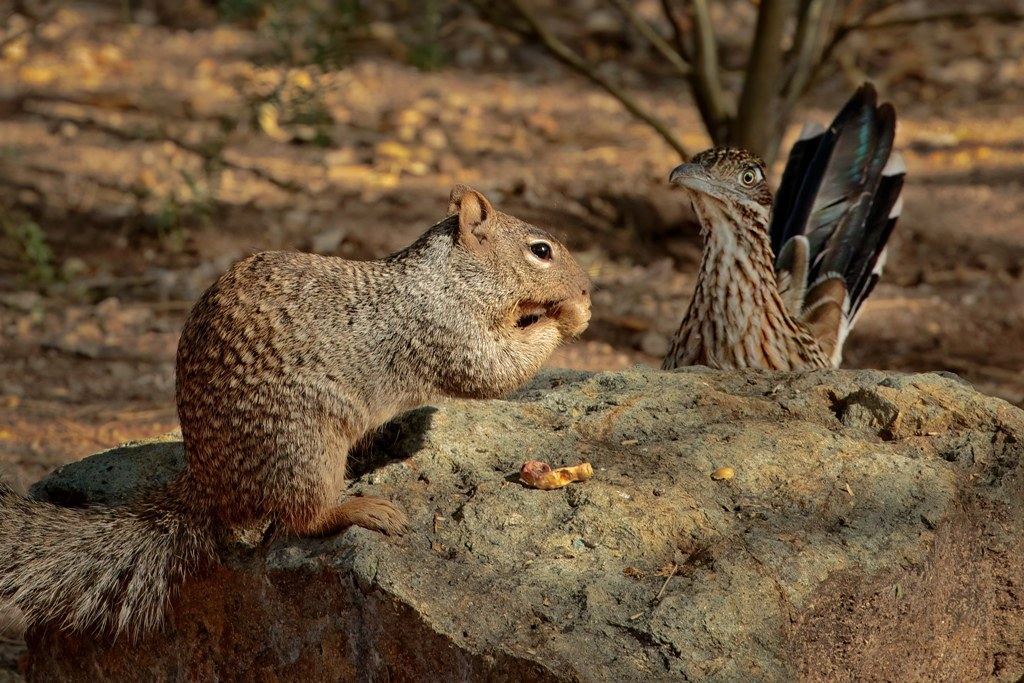 Roadrunner and Squirrel Games