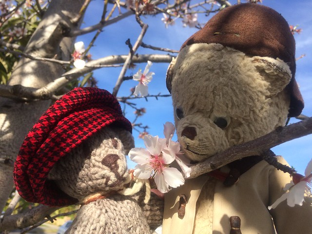 Paddington and Scout Sense the Coming of Spring