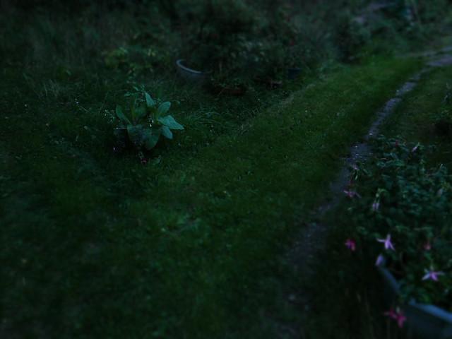 2018_08_19 P1010581 twilight path