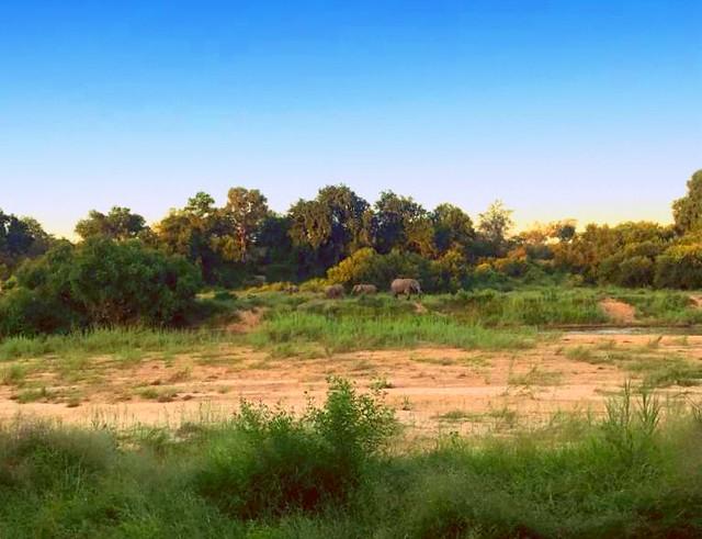 Elephants on the River Bank