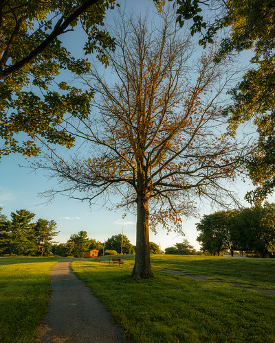 redgate park nature natural outside outdoors summer august morning sunrise sunlight bright green open rockville maryland md photography sony alpha a7riii ilce7rm3 trees branches leaves beauty beautiful emount fullframe voigtlander superwide heliar asphyrical 15mm landscape sky clouds blue oak orange path