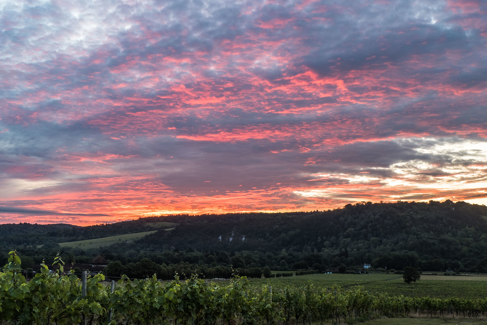 Sunrise over Box hill, Surrey