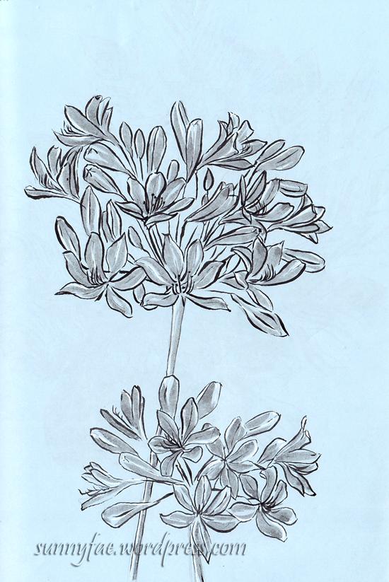 agapanthus value sketch