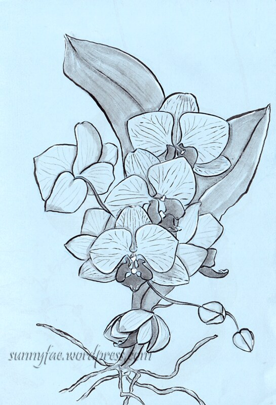 orchid value sketch