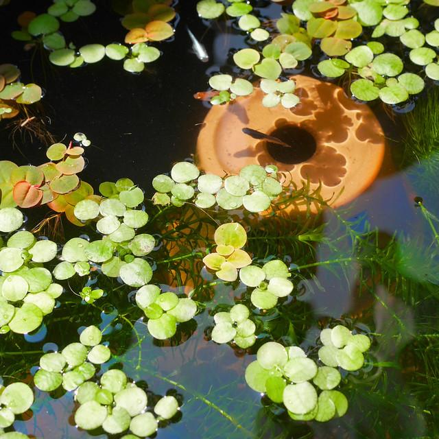 1080x1080 Mini Pond 20200809