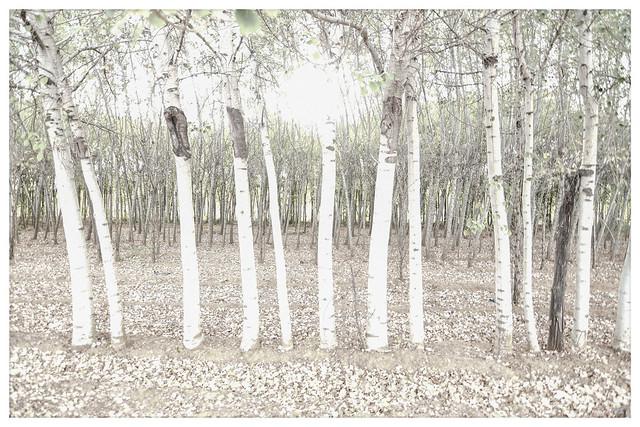 Cualquiera que piense que las hojas caídas están muertas, nunca las ha visto bailar en un día ventoso.