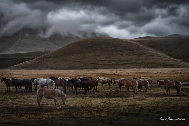 Between mist and horses