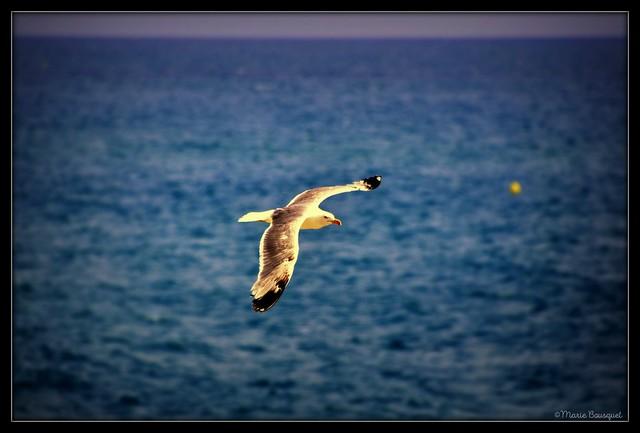 Vol au-dessus des flots