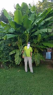 Rudi Goes Bananas