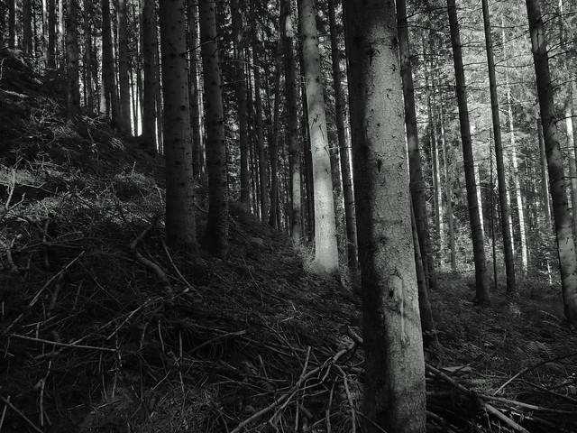 deep side@Schwaben forest, Germany 3