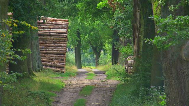 Oaks - around Beberbeck