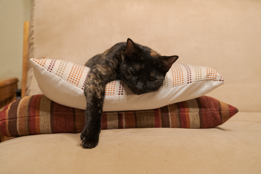 Our cat Trixie sleeps on pillows with one arm in front of her on August 30, 2020. Original: _CAM5113.arw