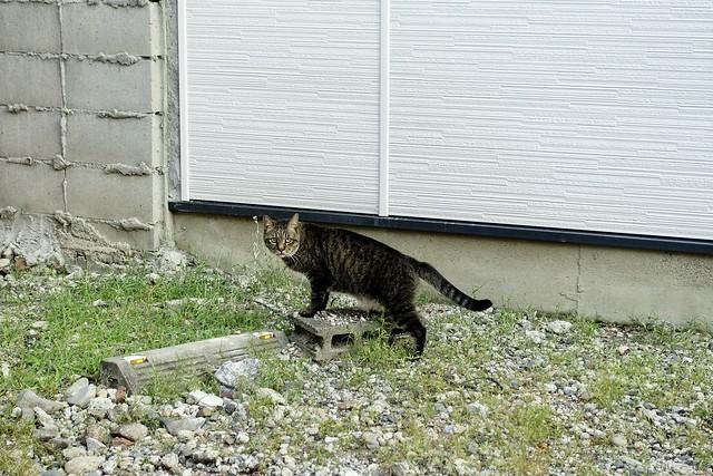 Today's Cat@2020ー08ー31
