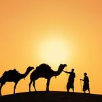 Camel Men with Camels