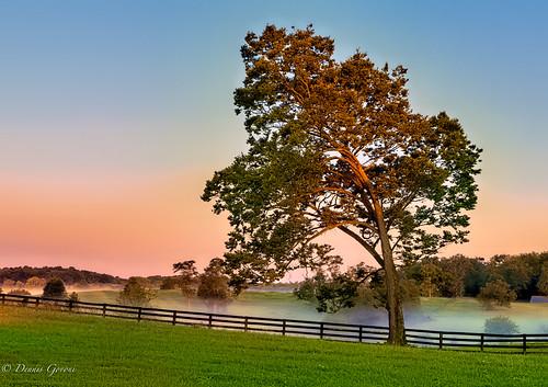 virginia virginiaarboretum arboretum background landscape summer sunrise tree