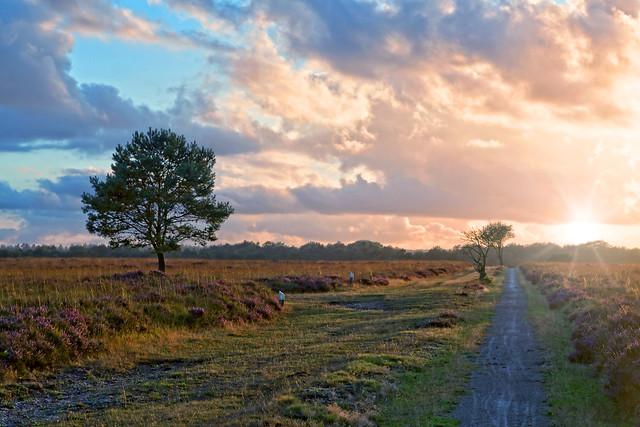 last sun by the Heathland