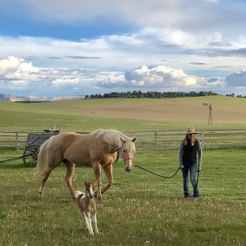Zion Mountain Ranch Horses