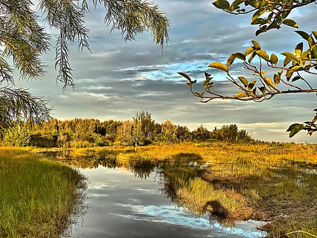 South wet prairie 20200831