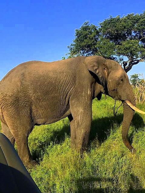 Gloomy Elephant