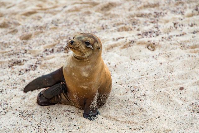 Armchair Traveling - The Welcoming Committee on San Cristobal Island, Galapagos