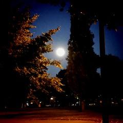"""""""I wish I was the moon tonight"""" Neko Case (Ned Fairchild / Merle Travis) ~ #SummerMoon #Moon #NekoCase"""