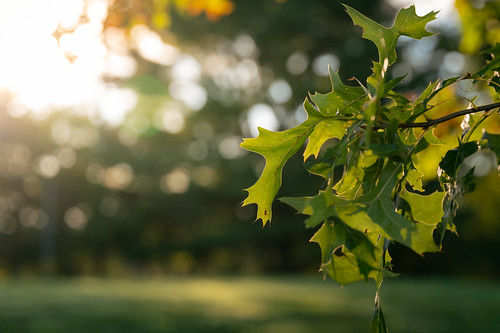 morning sunlight sunrise light shadow dark brighet contrast nature outside outdoors park trees branches leaves grass vibrant yellow green orange summer august rockville maryland md redgate early riseandshine sony alpha a7riii landscape photography sigma art a019 lens zoom 2470 2470mmf28dgdn|a fullframe emount bokeh