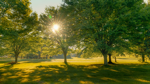 morning sunlight sunrise light shadow dark brighet contrast nature outside outdoors park trees branches leaves grass vibrant yellow green orange summer august rockville maryland md redgate early riseandshine sony alpha a7riii landscape photography sigma art a019 lens zoom 2470 2470mmf28dgdn|a fullframe emount