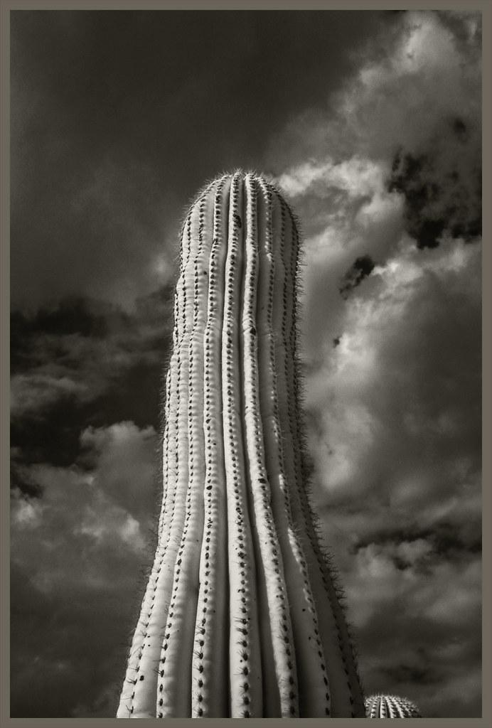 Cacti IR #2 2020; Bottle-Shaped Saguaro