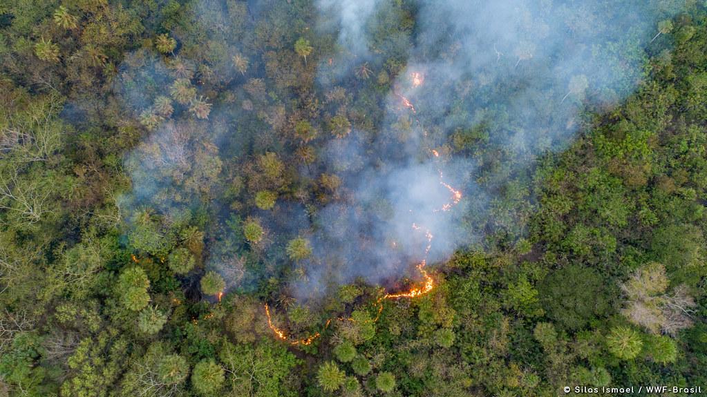 全世界最大濕地-巴西潘塔納爾濕地正在燃燒。照片來源:Silas Ismael / WWF-Brasil(CC BY-NC 4.0)