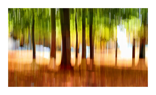icm sony trees ontari0 canada kanada abstract moving camera light green red artsy fartsy art stripes moved lens